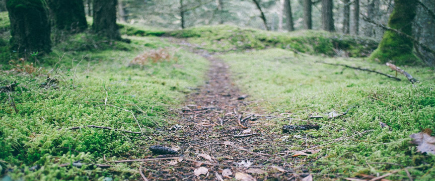 path size